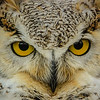 """Just A Hoot""<br /> <br /> 1st Place - November 2013 - MVPC Pro Digital Open (monocolor)<br /> Merit - October 2013 - N4C Digital Nature"