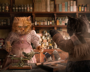 Cat Transaction