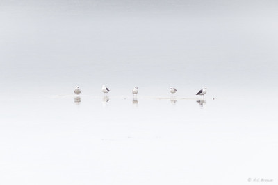 Five Birds