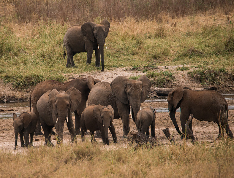 Elephant Herd at a Watering Hole in Tanzania, 3rd Place, Nature, Intermediate, 3/20/18