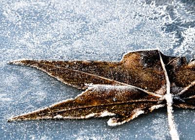 Frosty Leaf Grunge