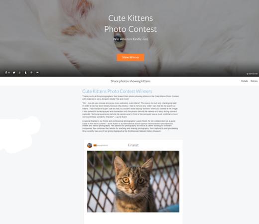 Cute Kittens Photo Contest - Finalist