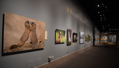 The Exhibit Gallery.