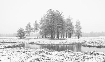 Wetlands Snow