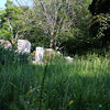 Lynn, Ma. 5-31-17. Tall grass around graves at Pine Grove Cemetery.