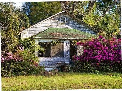 "David Keener -  ""Abandoned Azaleas"" -  Honorable Mention iBrunswick Beacon, Uniquely Brunswick County Photo Contest"