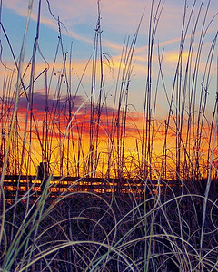 "Wendy Wagner - ""Sunset Through the Reeds"" - 2009 Sunset at Sunset - 2nd Place"