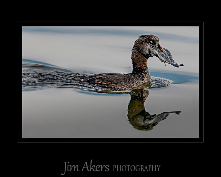 """""""Catch of the Day"""" scored 81 in recent 2014 Professional Photographers of California competition. This photo was published in the Loan Book-Best of the Best- recipient from Professional Photographers of America- International Photography Competition in 2014, page 40."""