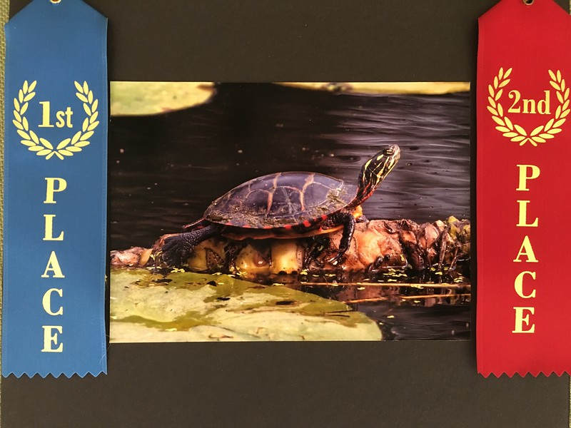 First Place Nature & Second Place Peoples Choice