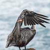 2016 Audubon Photography Awards Top 100 Images