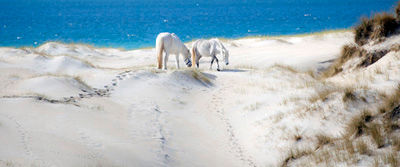 Horses on Luskentyre Beach, Isle of Harris, Scotland