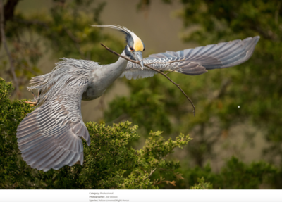 2019 Audubon Awards Top 100