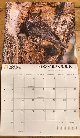 National Geographic 2020 Owl Calendar