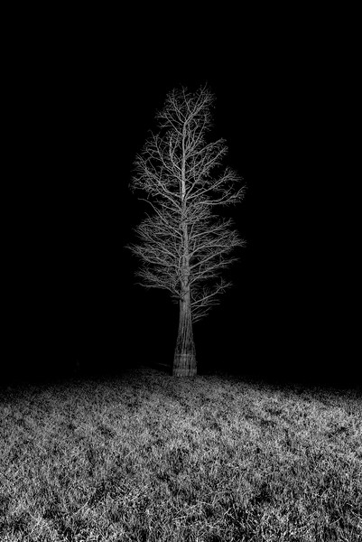 Tree At Night XII
