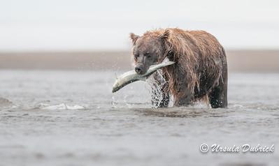 Published in Jan. 2014 issue of National Wildlife Magazine
