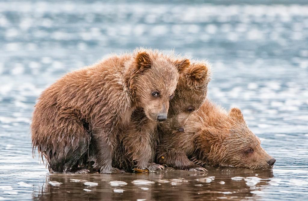 """Published in """"Alaska Magazine"""""""