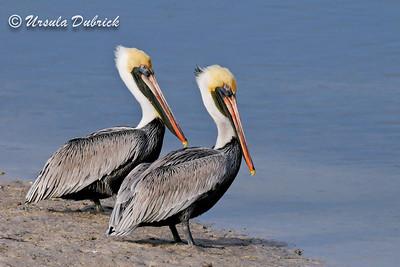 Published in 2014 National Wildlife Calendar