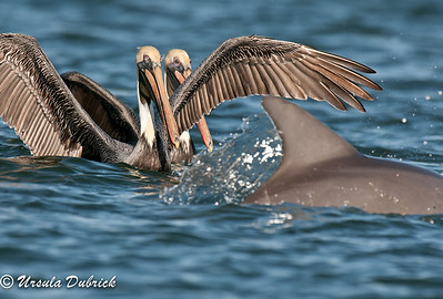 Published in 2014 Indian River Lagoon Calendar