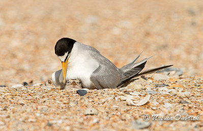 Published in 2015- Audubon Baby Bird Calendar