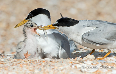 One of the top 100 photos - NANPA 2013 Photo Competition