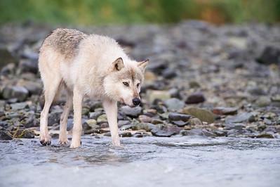 Third Place - Alaska Magazine 2018 Photo Contest, Wildlife