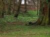 Audley End Estate, Saffron Walden UK