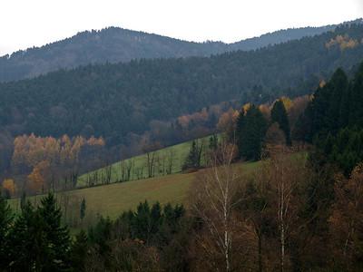 Black Forest & Freiburg