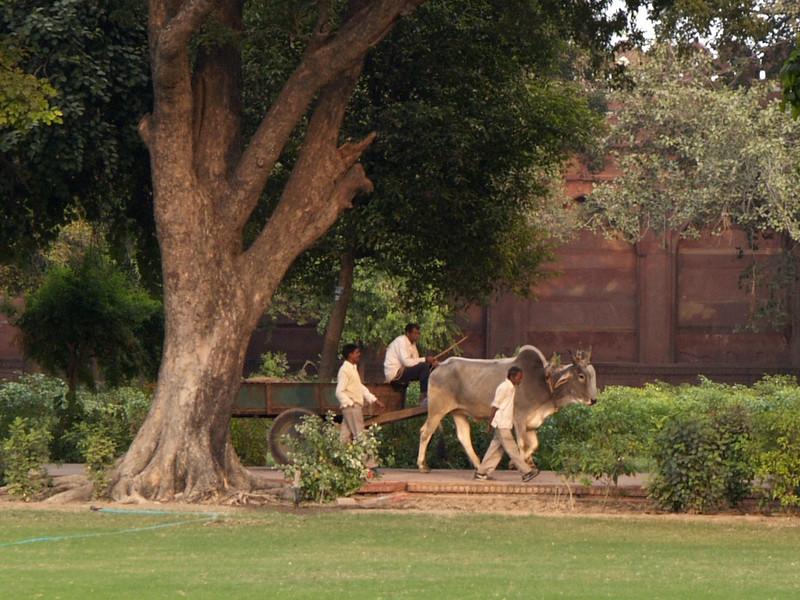 Bull cart | India | 2006 |