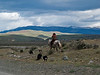 Gaucho and sheep dogs
