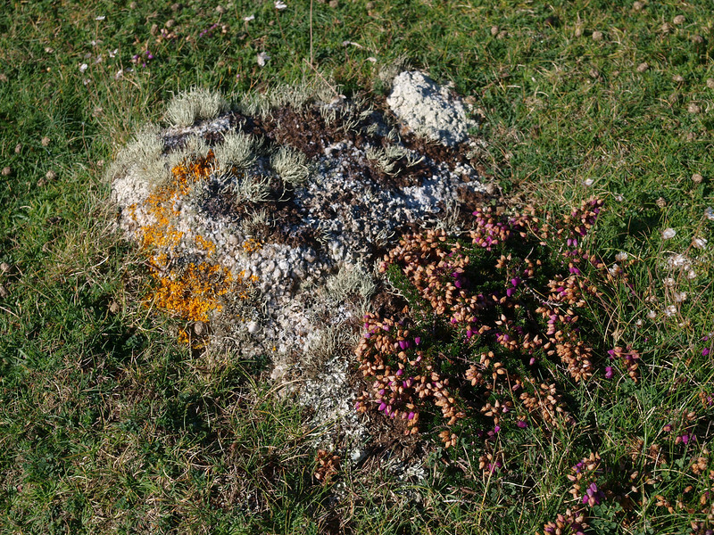 Lichens and heather on stone