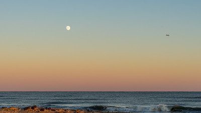 The Sea, Moon, Gull and Sand, Chincoteague