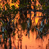 Sunset in the Wetland