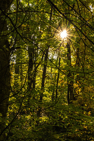 Sun Dappled Forest