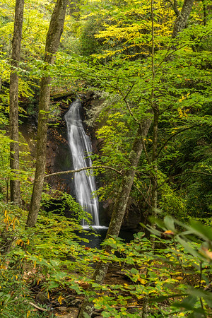 Forest Waterfall With Branch