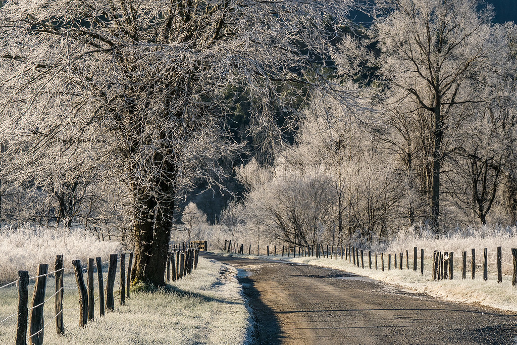 Spark's Lane with Hoar Frost