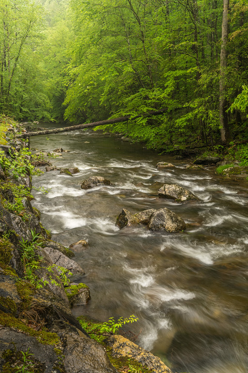 Downstream in the Rain, Cades Cove