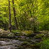 Forest Stream, Smoky Mountains National Park