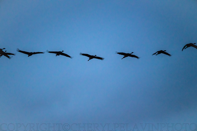 Cranes in a Line