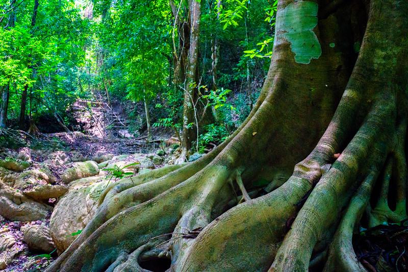 Luang Prabang Jungle