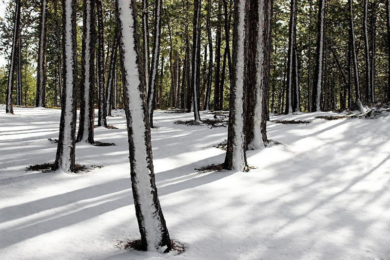 Snow Lines<br /> <br /> Black Hills<br /> South Dakota<br /> (2-18742)