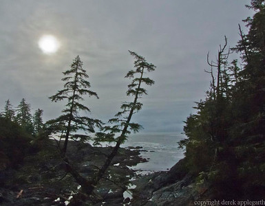 Near Ucuelet,  Pacific Rim National Park.  Vancouver Island.  BC.