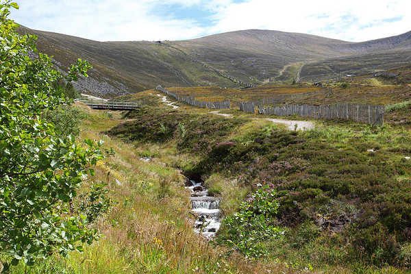 The view from near Cairngorm Ranger Base looking to the summit, 19/08/11