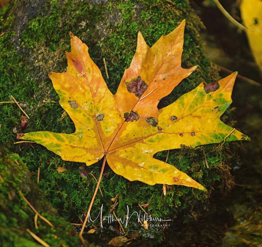Leaf on the Rock