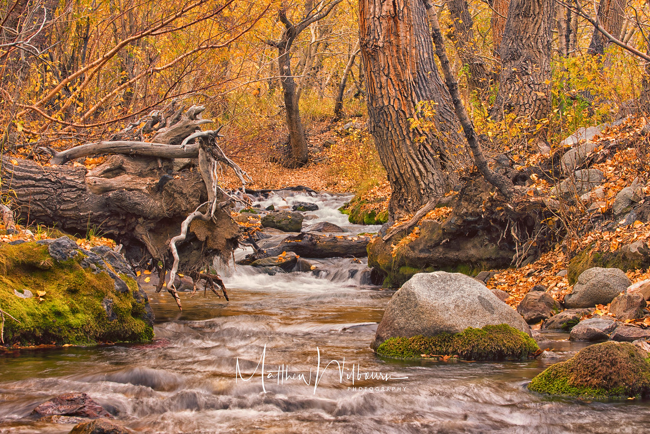 That Creek