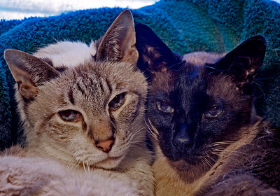Floyd and Jack, the last of a bunch of wonderful cats who have kept Barbara, Andy and I company over the years.  Sadly they too are now gone, and as we have gotten older and wanted to travel more, we decided to go catless.  It was a hard decision as simplified our life.