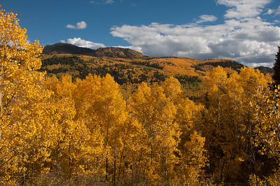 Fall color in northern New Mexico along the Cumbres and Toltec Scenic Railroad. October 2, 2016.