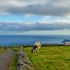 Original Azores Terceira Island Landscape Photography 60 By Messagez com