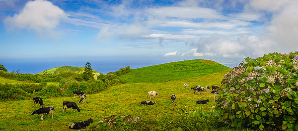 Portugal Azores Sao Miguel Island Photography 23 By Messagez com