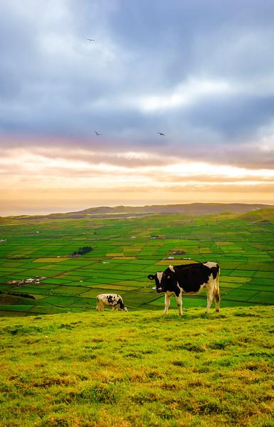 Original Terceira Island Top Viewpoint Landscape Photography 3 By Messagez com