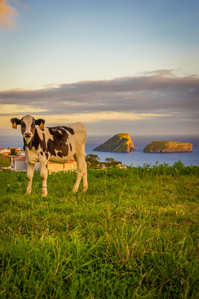 Original Welcome to The Azores Photography By Messagez com